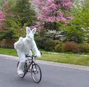 bunny-bike
