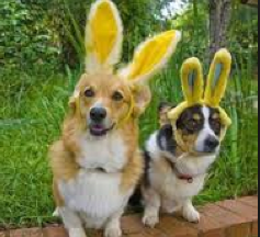 dogs-bunny
