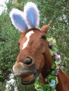 horse-bunny